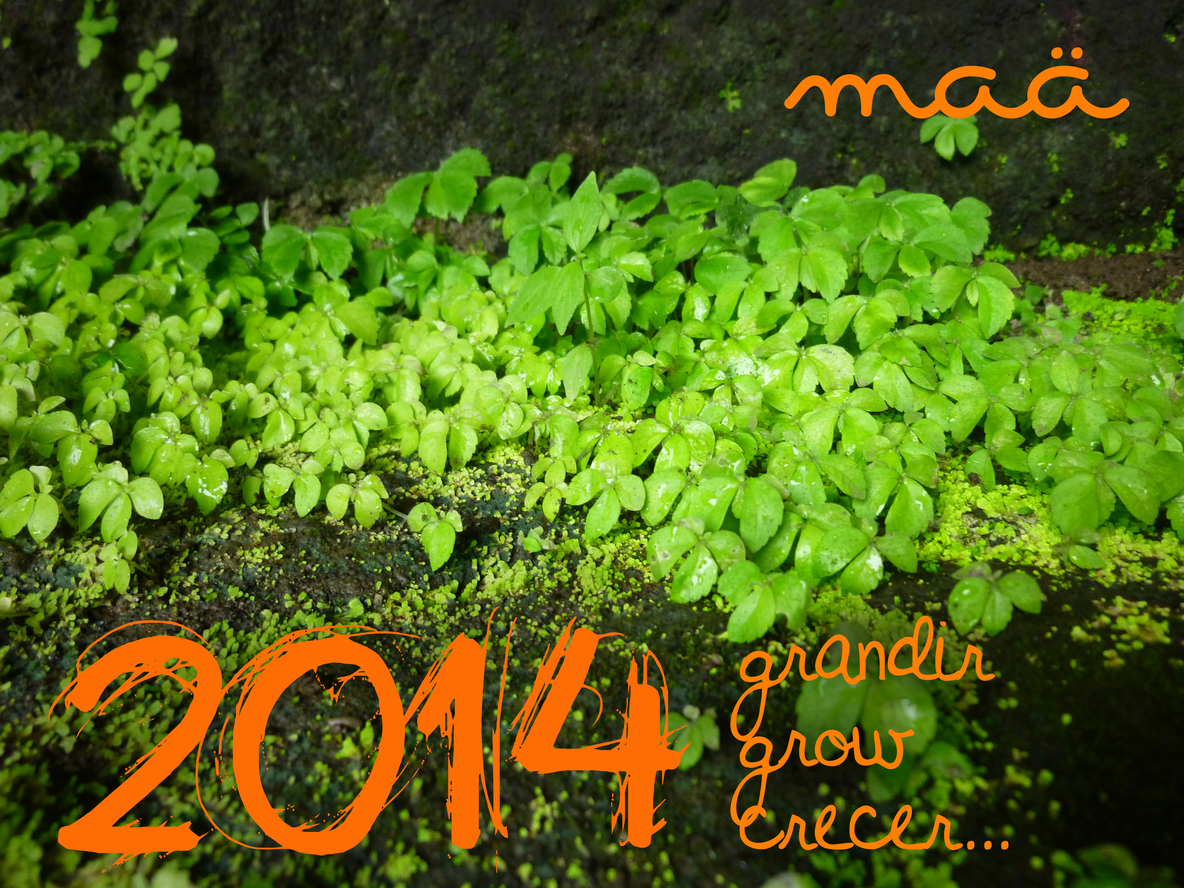 voeux 2014 maa